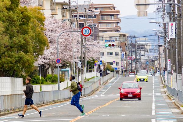 桜-2003307