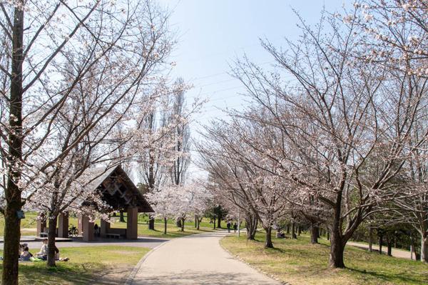 山田池桜の道-2103231-3