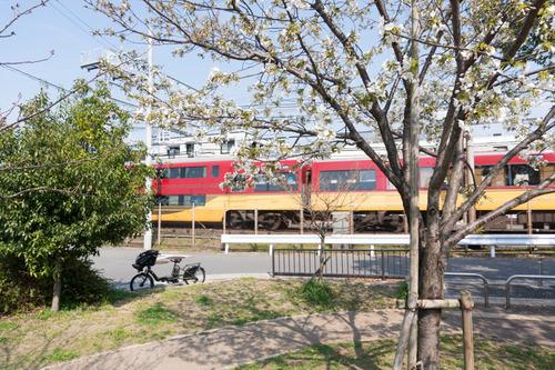 南中振公園桜-1503312