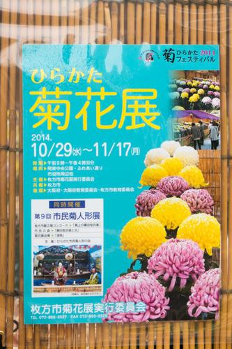 菊花展-14103110