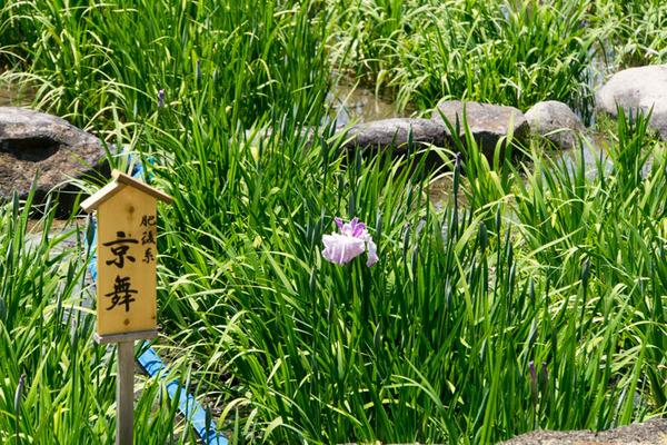 花しょうぶ園-1905253