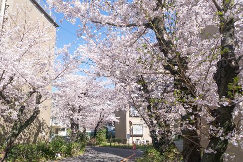 桜写真-3