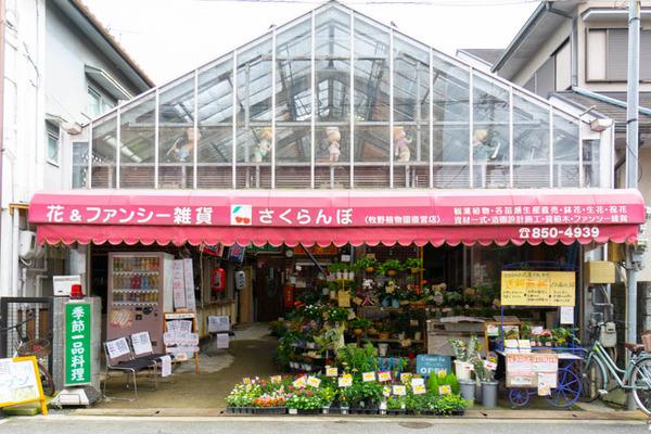 sakuranbo_広角_小-20200717-15