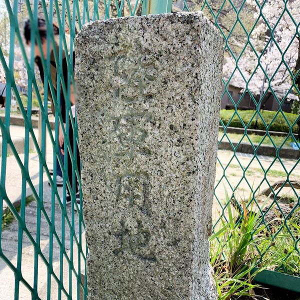 桜公園-1904062