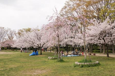楠葉東公園-2