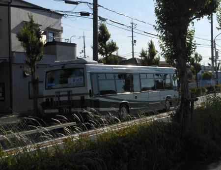 とうかえでの道02