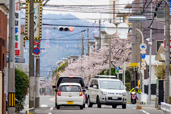 桜-2003305