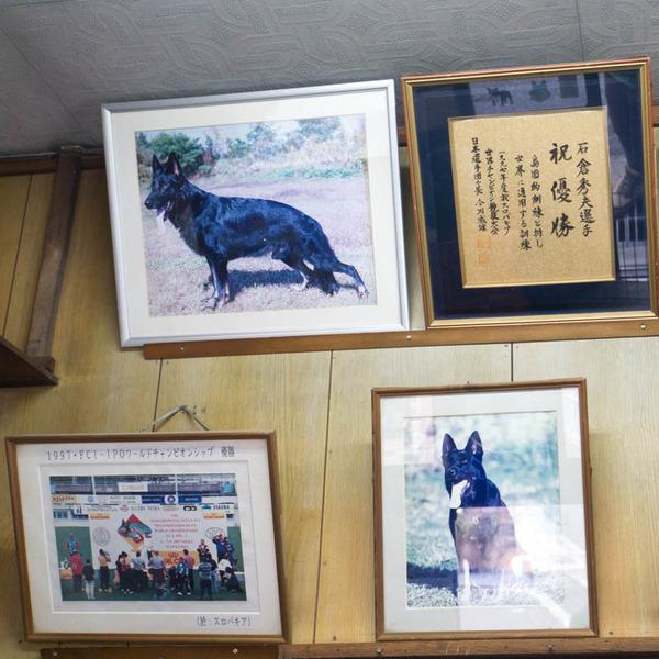 石倉警察犬訓練所-1803202