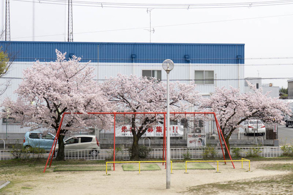 桜-1604061