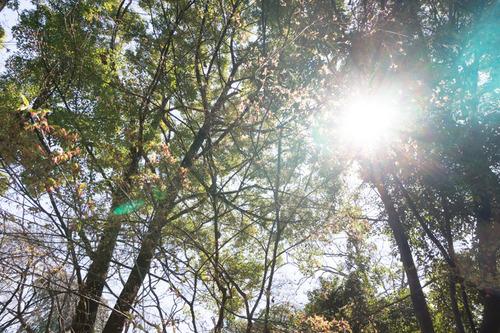 第8回なかなかの森バザール-6