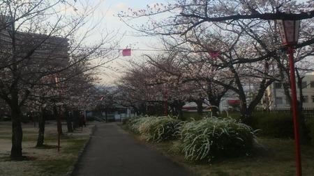 牧野阪公園130328_02