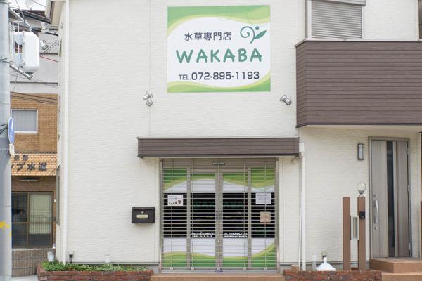 WAKABA-1606158