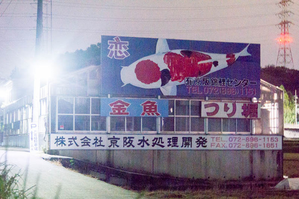 京阪錦鯉センター-1705031