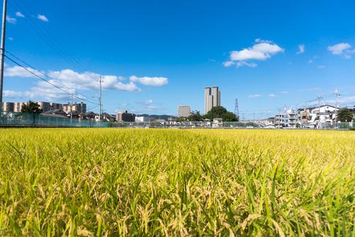 船橋本町2-113