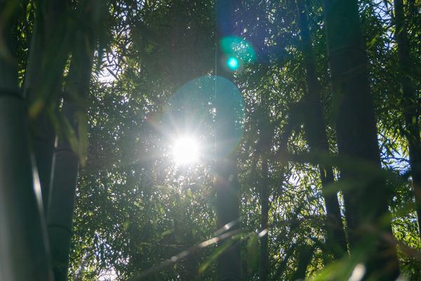 八幡天然温泉 施設名称決定-7