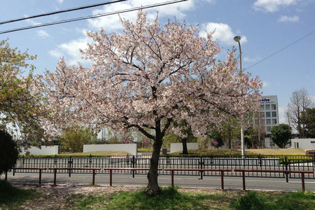 甲斐田公園130408_01