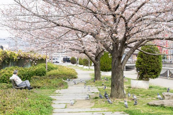 桜-1704051