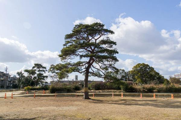 百済寺跡公園-1702039