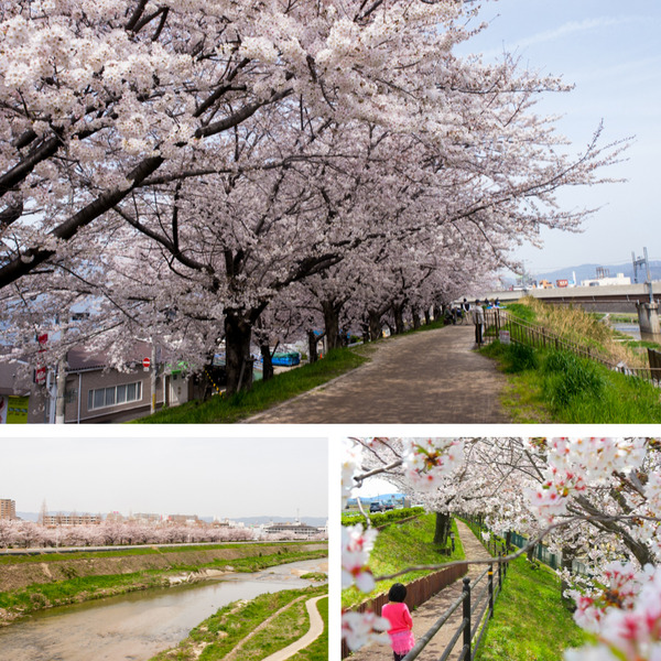 天野川沿い