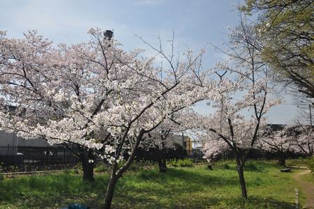 車塚公園130404_01