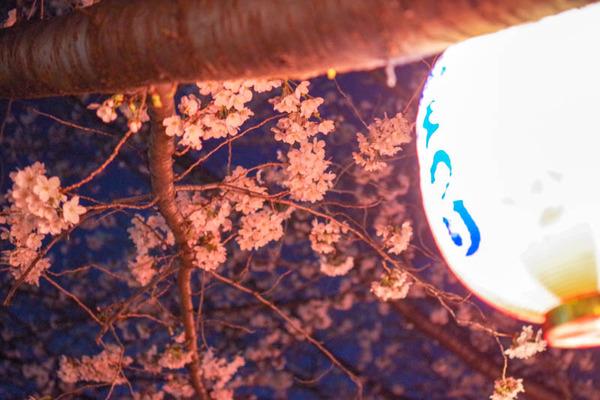 桜祭-1803268