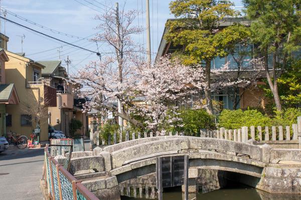 桜祭-1803261