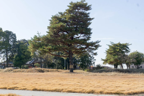 百済寺跡公園-16120315