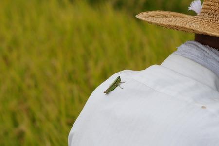 村野の米14