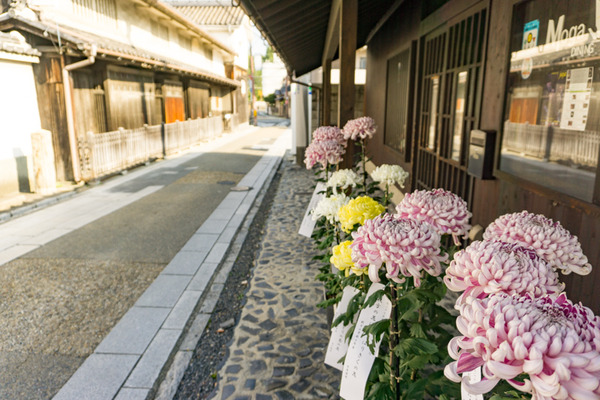 枚方宿街道菊花祭-3