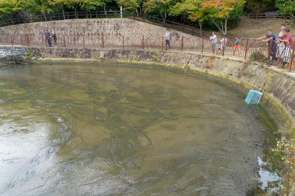 池の水2-1910206