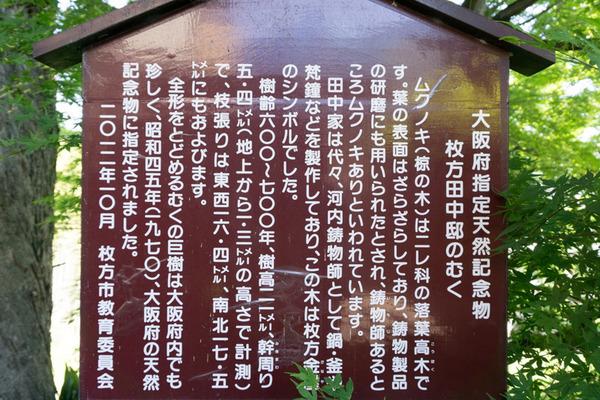 枚方田中邸のむく-2