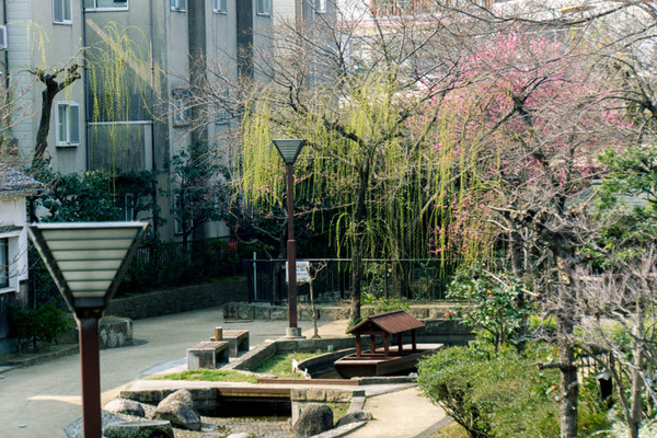 桜-1703291
