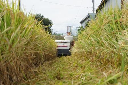 村野の米17