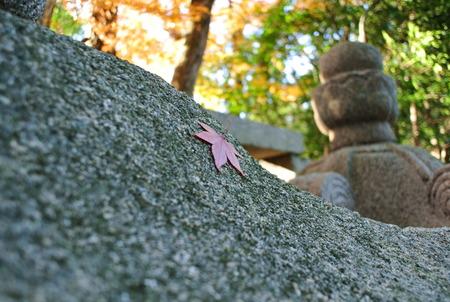 石清水八幡宮の紅葉131203-08
