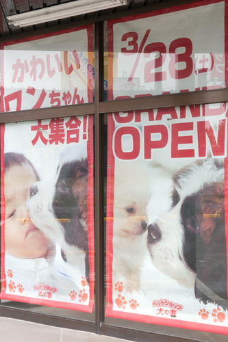 犬の家-15031803