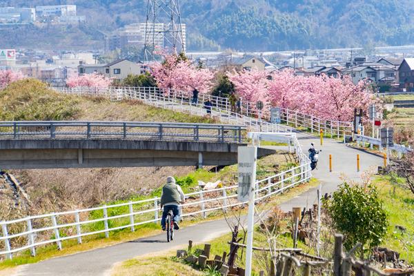 桜-2003023