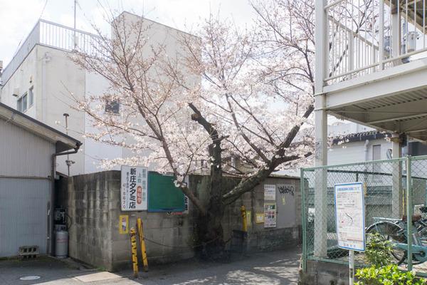 桜-1904024