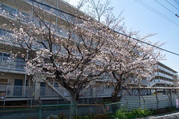 桜tuda -2103231