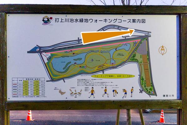 寝屋川桜-1703254