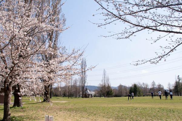 山田池桜の道-2103231-6