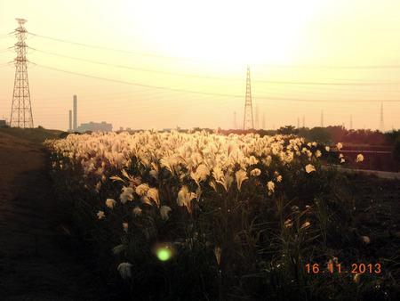 淀川河川敷131116-03