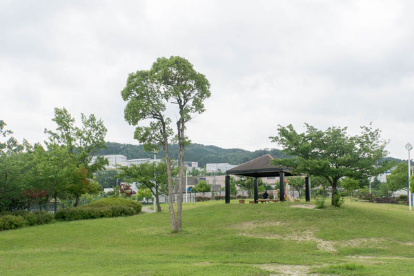 くにみの丘公園-18062812
