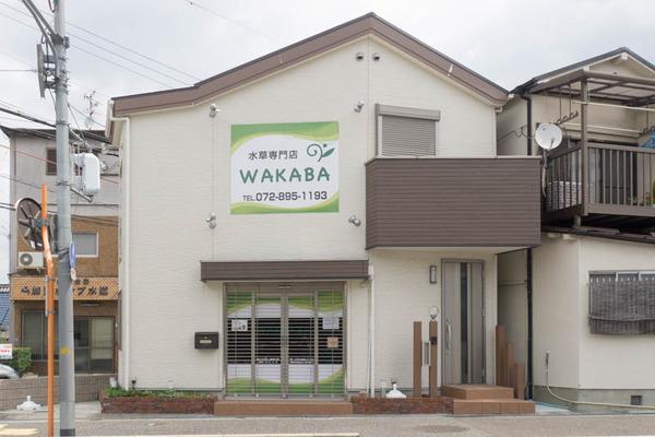 WAKABA-1606157
