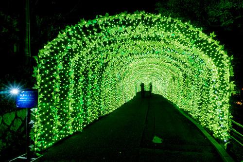 ひらかたパーク光の遊園地-151111103