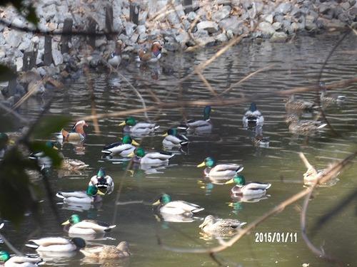 山田池公園02
