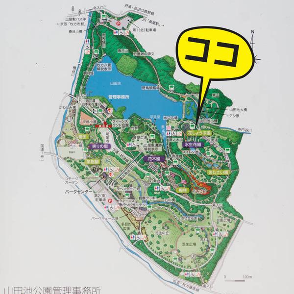 山田池公園-18052520