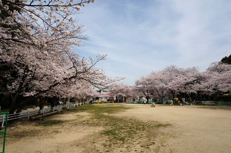 茄子作の桜130401_01