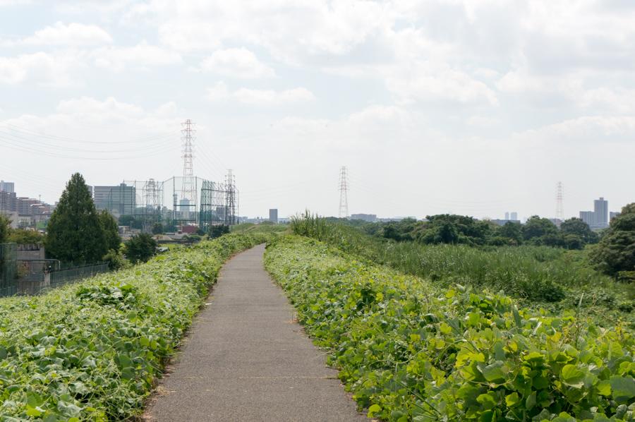 淀川堤防_渚-2