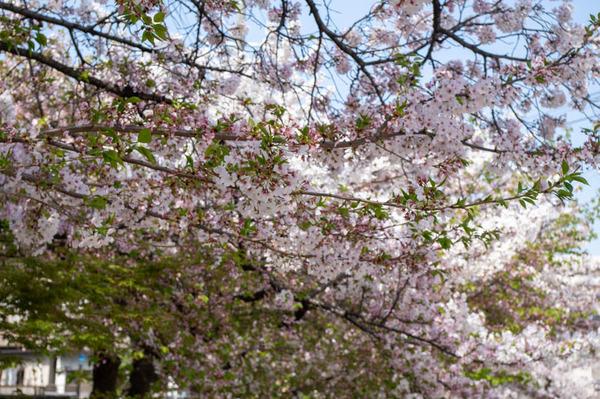 桜1-2104021