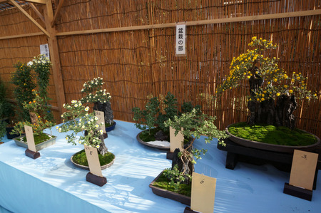 菊花展131105-50